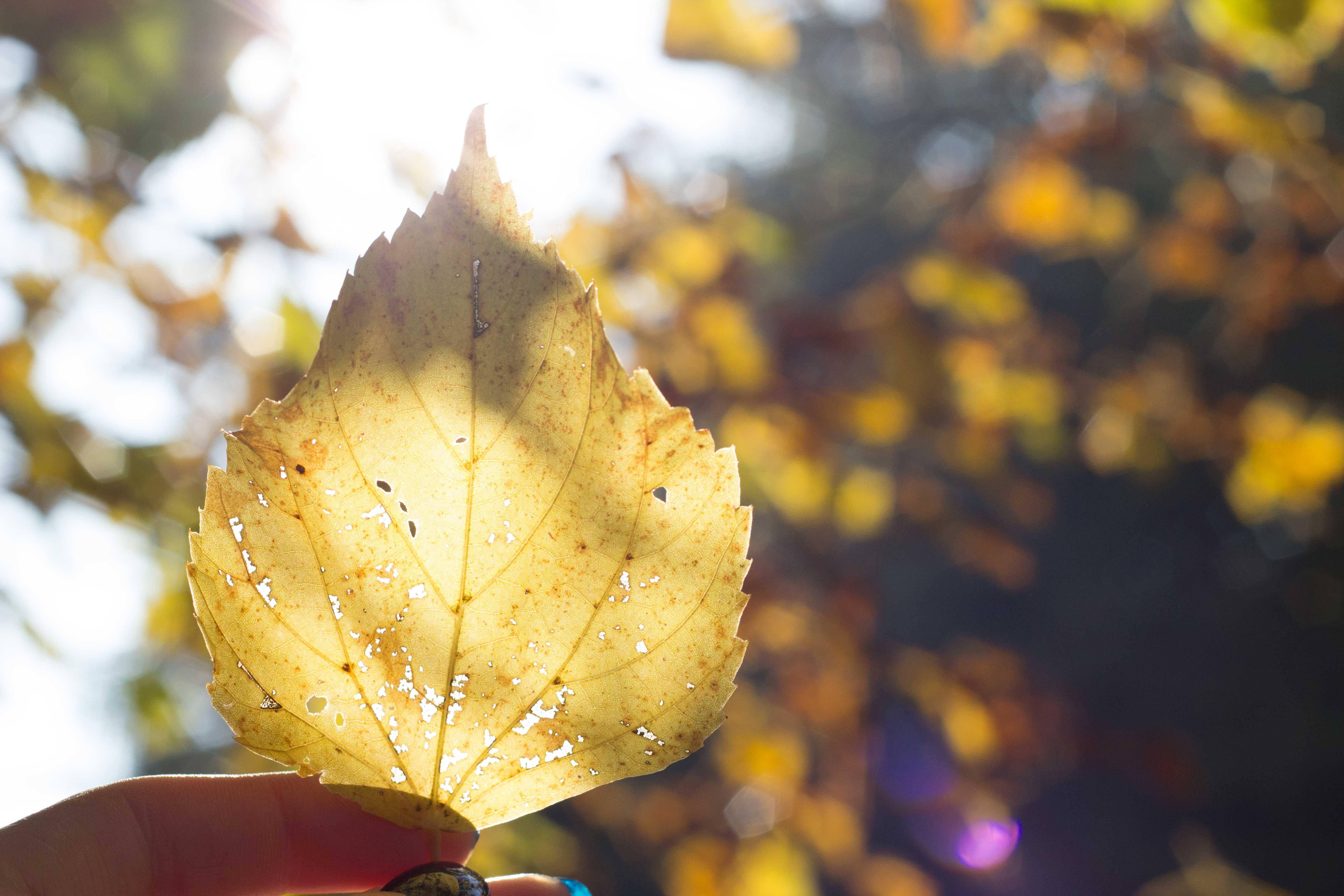 herfst, warmte, 4 redenen