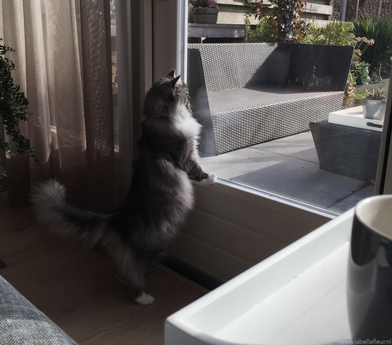 katten, lady,